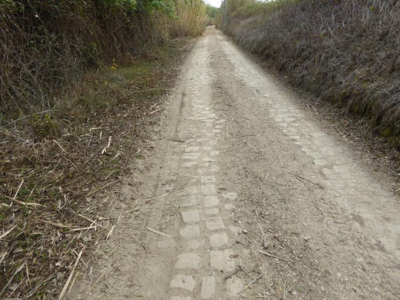 Camino Portugués - 8 of 30